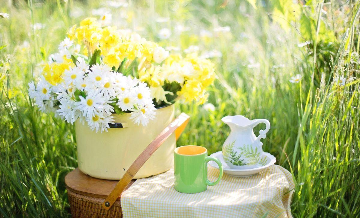 ceai verde pentru steatoza hepatica