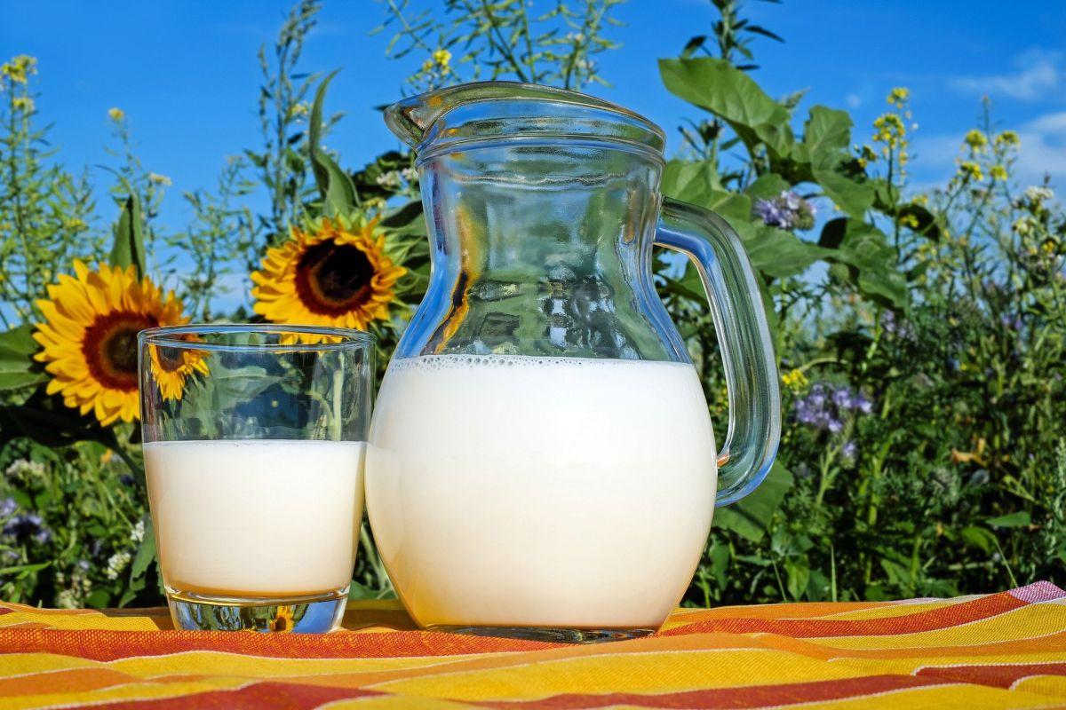 lactate pentru ficat gras